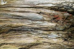 Weathered wood. Close up of an old weathered tree trunk Stock Photos