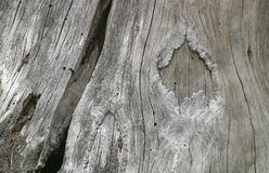 Weathered wood detail Royalty Free Stock Images