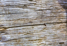 Weathered wood found at the beach close up Stock Photos