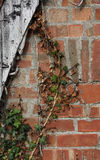 Weathered wood with ivy and brick wall Stock Photos