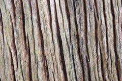 Weathered Wood Texture. Close Up Stock Photos