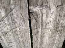 The weathered wood Stock Images