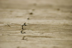 Weathered wooded boards with nails Stock Image