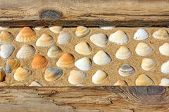 Weathered Wooden Boards and seashells Royalty Free Stock Photos
