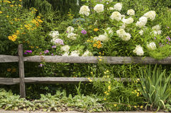 Weathered wooden fence and flowers Stock Photo