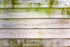 Weathered wooden fence. With green moss Stock Images
