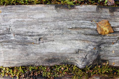 Weathered wooden plank, edged by lush moss Royalty Free Stock Photos
