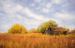 Weathered wooden sheds in colorful autumn landscape. Two collapsing gray wooden farm sheds surrounded by tall weeds and clumps of trees in a colorful autumn Stock Photos