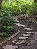 Weathered wooden stairs in the forest Royalty Free Stock Image