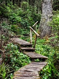 Weathered wooden stairs in the forest Royalty Free Stock Photography