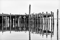 Weathered and Worn  Pier at Bodega Bay Stock Photo