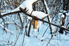 Weathered yellow leaf on twig covered with snow, winter background. Weathered yellow leaf on twig covered with snow, blurry winter background royalty free stock photo