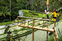 Weathervane в балийских полях риса Стоковые Изображения