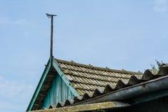 Weathervane na dachu Obrazy Royalty Free
