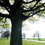 Weatwood Yorkshire do leste Inglaterra de Beverley Foto de Stock