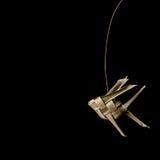 Weave рыб Стоковое Изображение RF