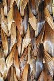 Weave de cesta Imagens de Stock Royalty Free