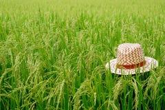 Weave do chapéu no campo verde do arroz, ideia de um campo de almofada no campo Foto de Stock