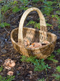 The weaved basket Royalty Free Stock Images