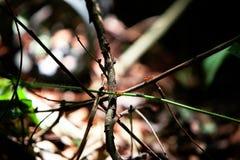 Weaver Ants in aard royalty-vrije stock fotografie