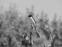 Weaver Bird Imagen de archivo