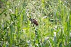 A weaver bird Stock Photo