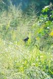 Weaver bird Stock Photo