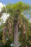 Weaver birds nests Royalty Free Stock Photography