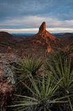 Weaver Needle at Sunrise Stock Image