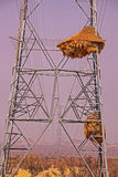 Weaver nest pylon. Electical pylon used for nesting purposes by Socialble Weavers Phileairus socius in Southern Namibia IMG 4060 stock photography