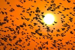 Weaverbird Fotografía de archivo libre de regalías