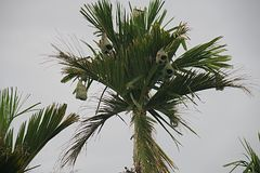 Weaverbird gniazdeczko Obraz Royalty Free