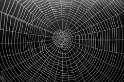 Web. A spider web is in the forest Stock Image