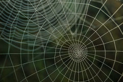 Web. A spider web is in the forest royalty free stock photos