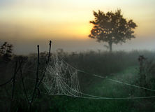 Web. Foggy morning, web has become covered by fine drops Royalty Free Stock Photography
