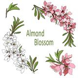 Vector branch with almond flowers clipart white and pink colors vector illustration