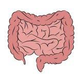 Guts illustration. Drawing of guts royalty free illustration