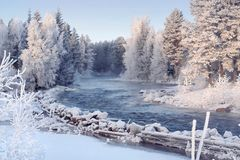 Winter forest picture with river royalty free stock photography