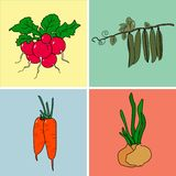 Radishes, peas, carrots, onions in the collection. stock illustration
