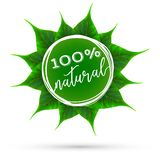 Realistic vector green leaves rosette eco theme royalty free illustration