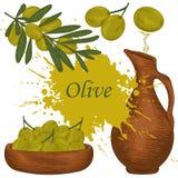 Olives, olive branch, olive oil, bottle of olive oil. vector illustration