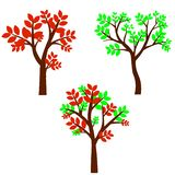 Deciduous tree in four seasons - spring, summer, autumn, winter. Nature and ecology. Natural object for landscape design or park. vector illustration