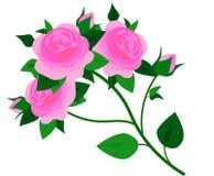 Beautiful pink rose, isolated on white stock illustration