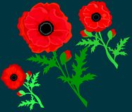 Red Poppy  isolated on white background. Vector red romantic poppy flowers and grass. red poppies. Card with poppies. vector stock illustration