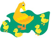 Web A wild duck with little ducks walks to the pond. A duck with small ducklings swims on the water. Cartoon illustration royalty free illustration