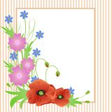 Wild flowers red poppies near the frame on delicate striped background royalty free illustration
