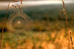Web. In the summer morning Royalty Free Stock Images