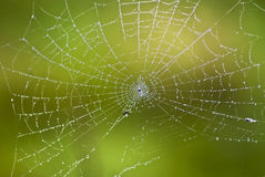 Web. Spider web with morning dew Royalty Free Stock Images