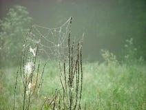 Web abandonada Foto de Stock Royalty Free