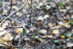 Web abstracto en un fondo indistinto Imagenes de archivo